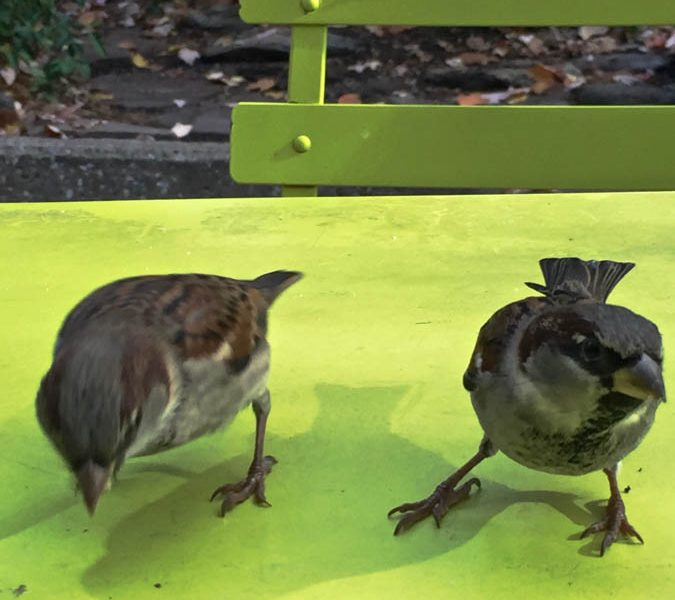 Lunch Buddy Sparrows