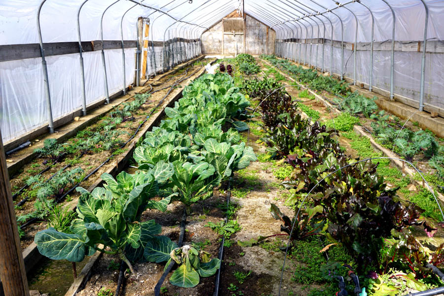 Greensgrow is home to nationally recognized urban farming.